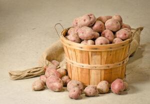 Хранение картофеля зимой. Основные правила