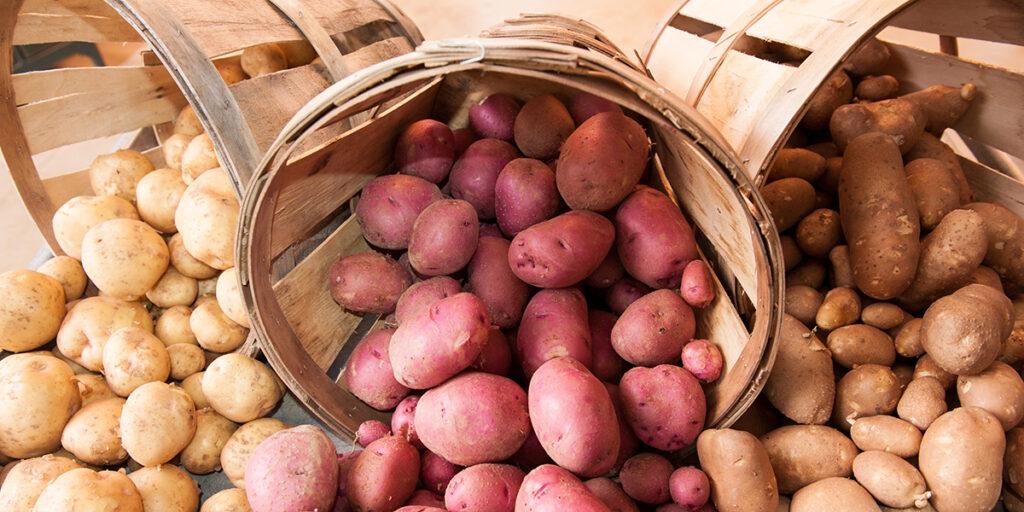 Сорта картофеля, предназначенных для хранения