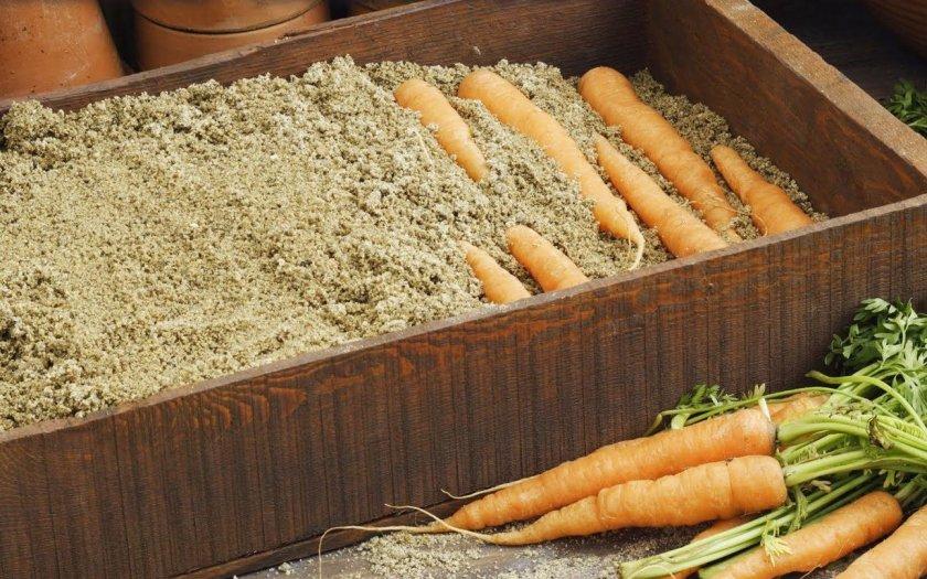Как хранить морковь зимой в песке?