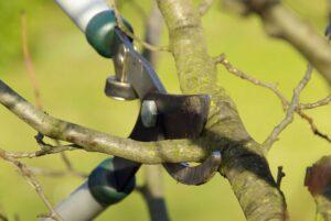 Обрезка плодовых деревьев осенью. Основные правила
