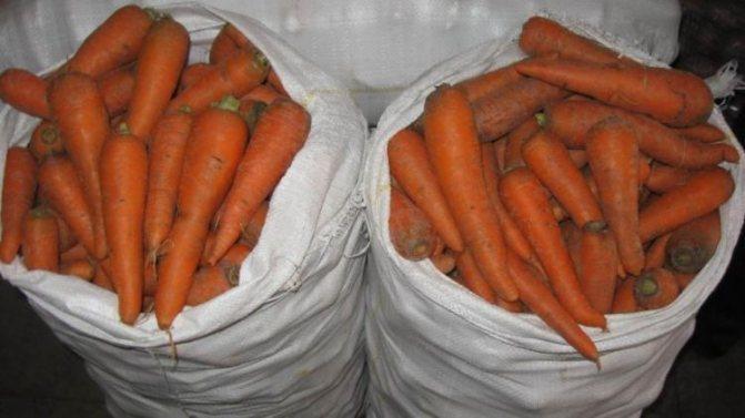 Сроки хранения моркови в зависимости от способа