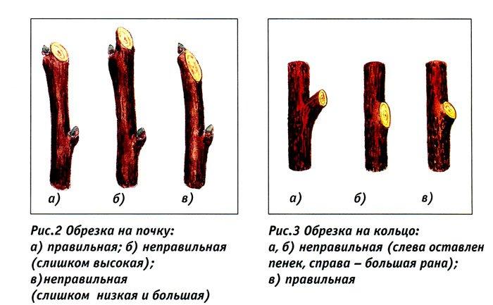 Типы обрезки