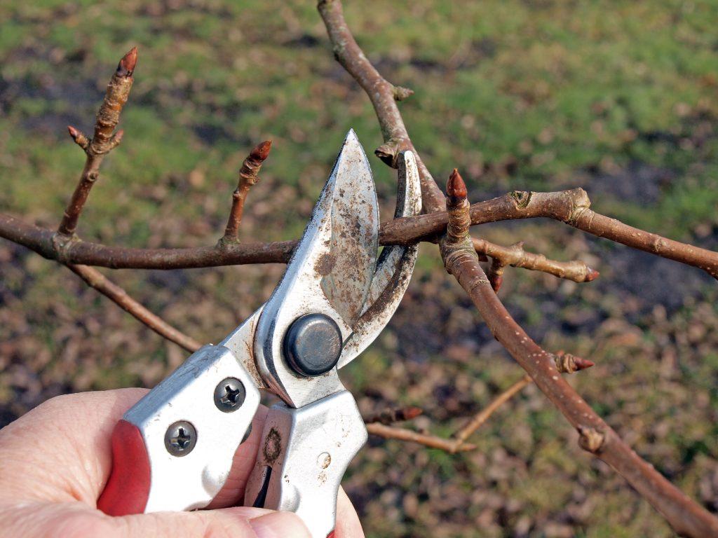 Зачем нужна осенняя обрезка плодовых деревьев?