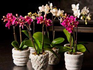 Как ухаживать за орхидеями в домашних условиях?