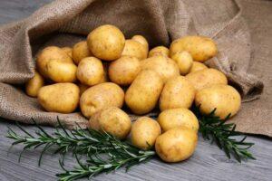 Картофель Гала: преимущества, описание, отзывы, видео, выращивание и уход