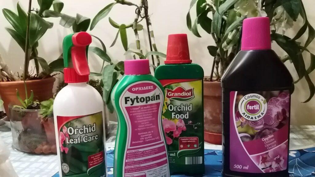 Нужна ли подкормка для орхидеи?