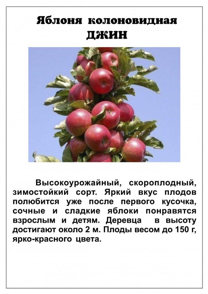 Описание яблони Джин