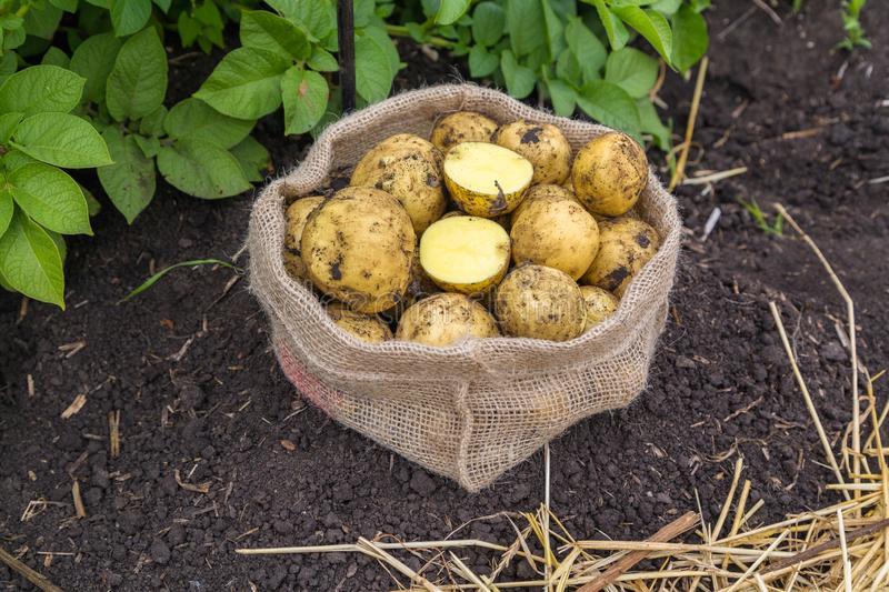 Сбор урожая и хранение
