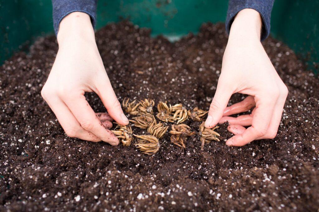 Выращивание растений из семян