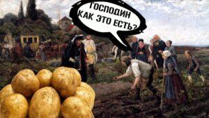 История появления и распространения картофеля в Европе и России