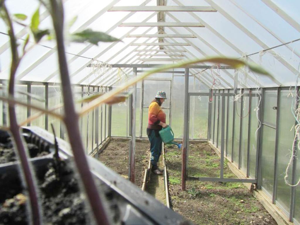 Обработка теплицы осенью от вредителей и болезней медным купоросом