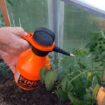 Подкормка томатов во время цветения и плодоношения