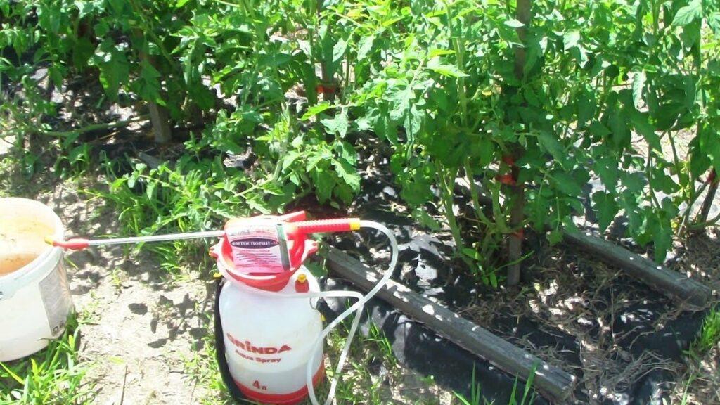 Внекорневая подкормка томатов борной кислотой