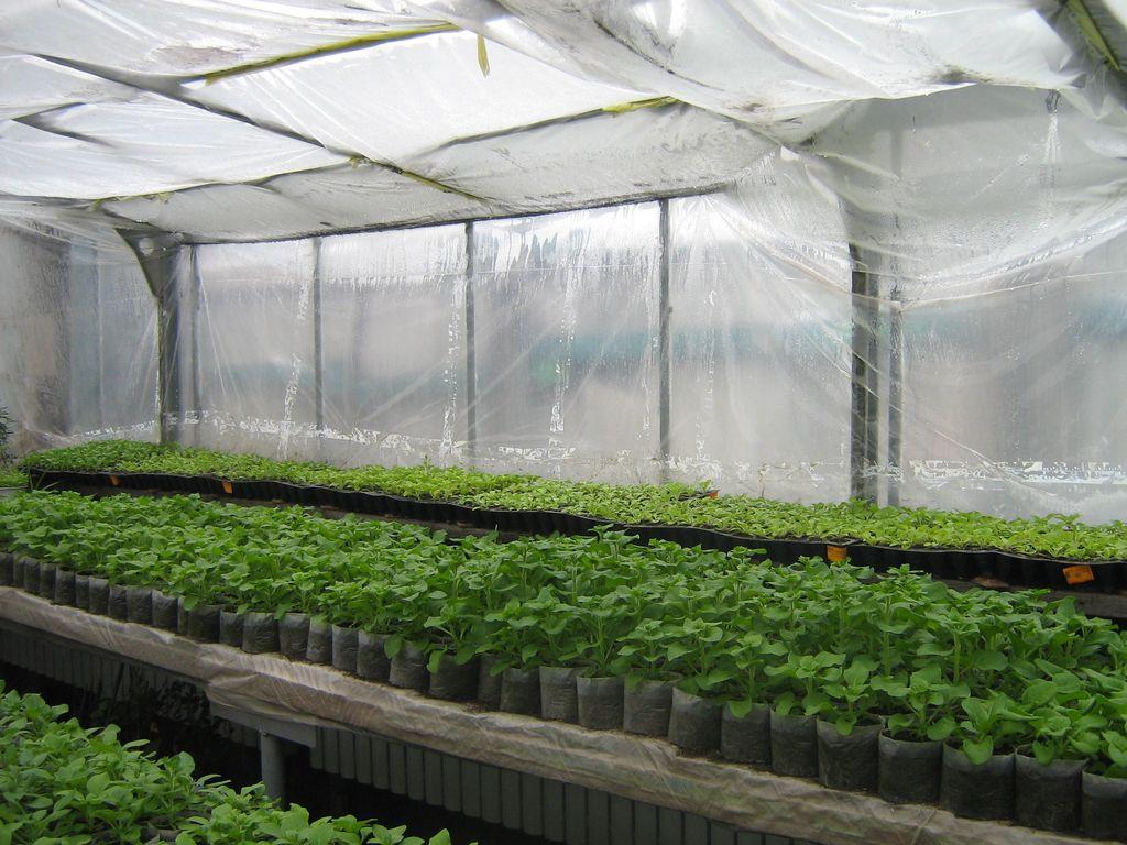 Посев в теплице