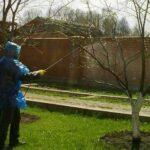 Чем опрыскать сад весной от болезней и вредителей?