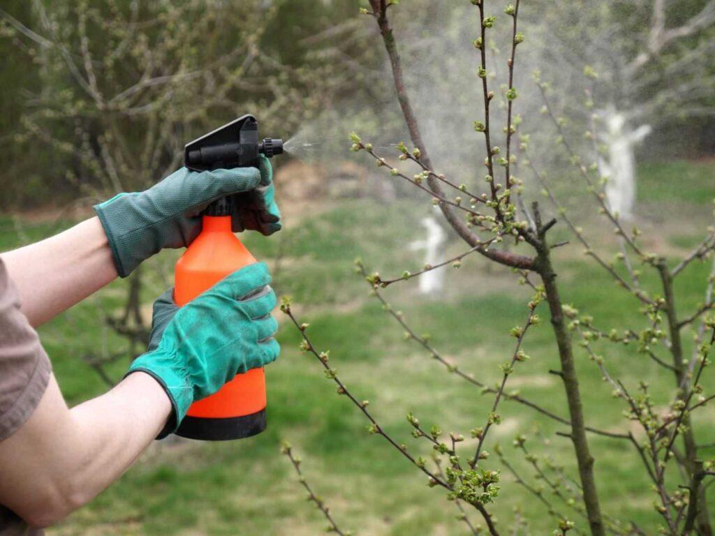 Нужно ли обрабатывать сады весной железным купоросом