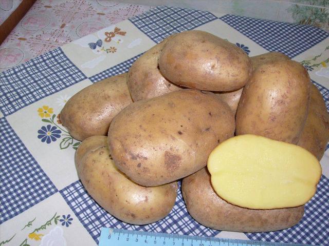 Тулеевский картофель