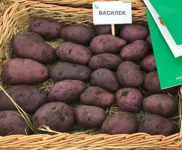 Агротехника выращивания картофеля Василек
