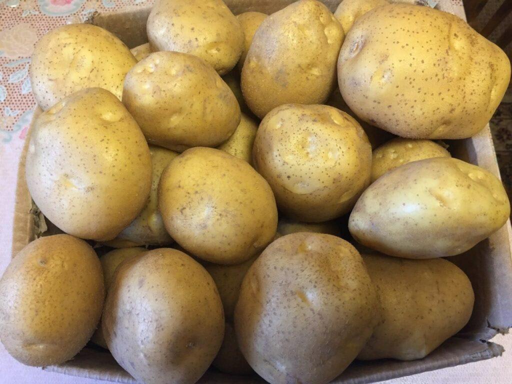 Достоинства картофеля Венета
