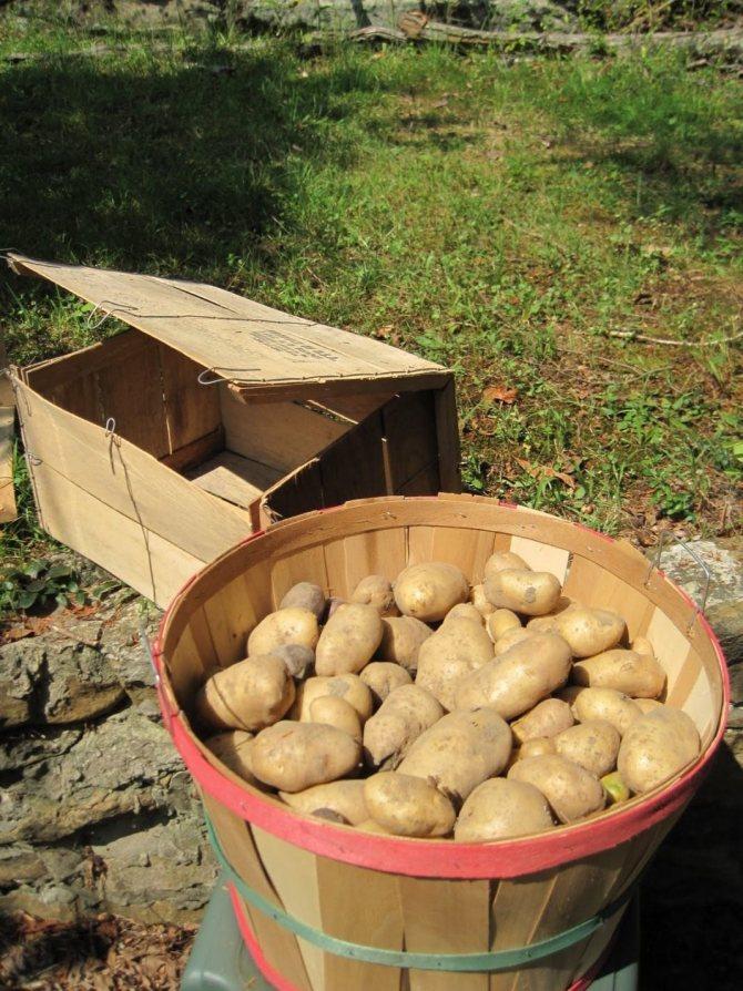 Хранение картофеля в ящике