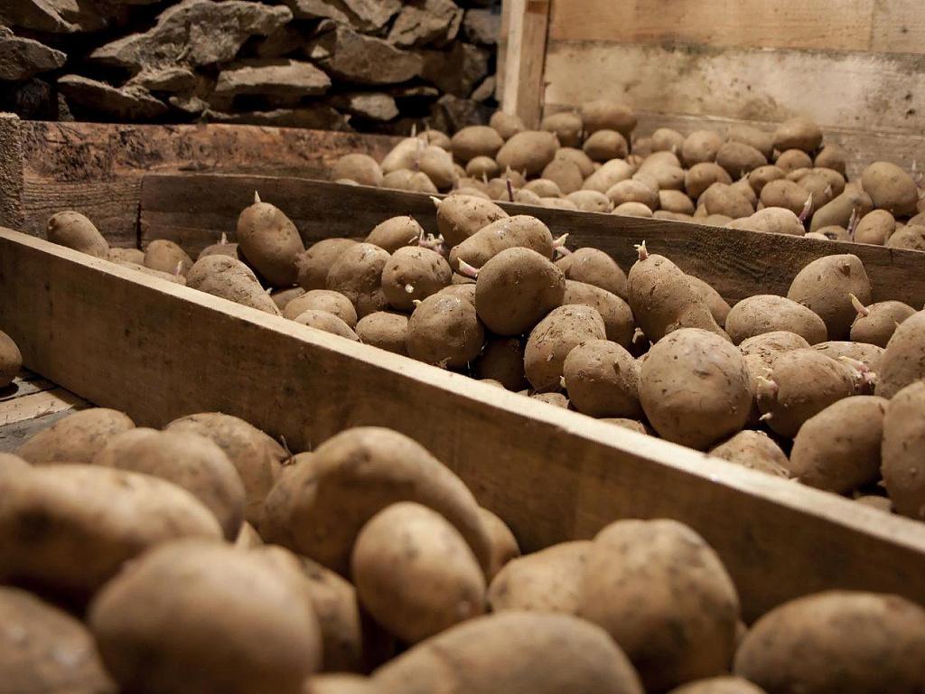 Хранение картофеля Великан