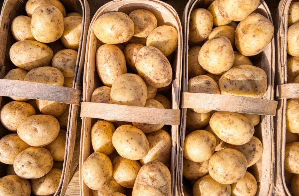 Как правильно хранить картофель Колобок