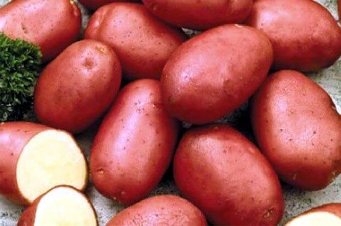 Как выглядит картофель Ред Скарлет