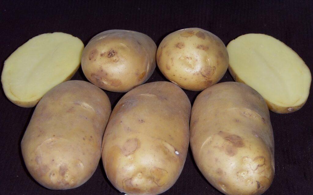 Картофель Великан