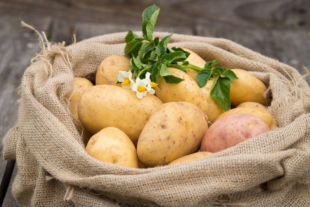 Лучшие сорта картофеля для жарки