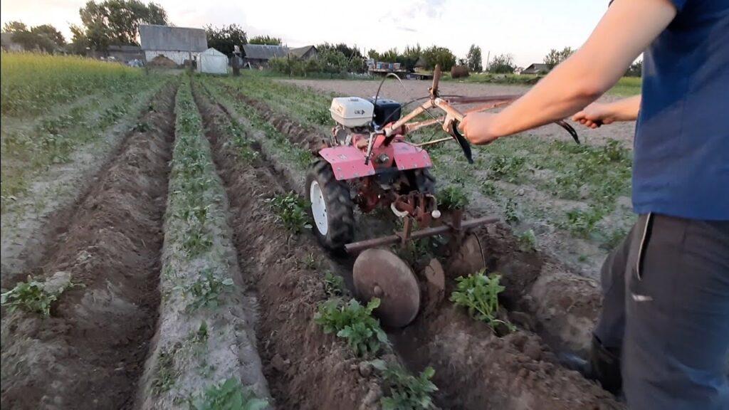 Окучивание картофеля Синеглазка