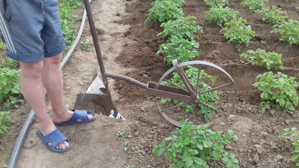 Окучивание картофеля Скарб