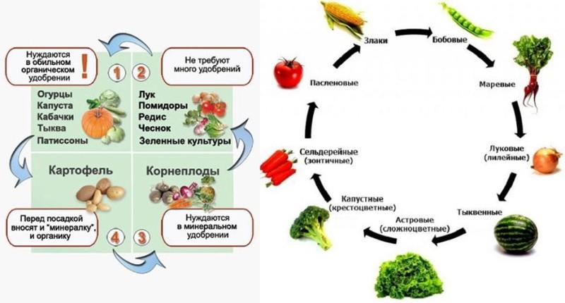 Особенности севооборота картофеля