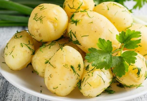 Отворной картофель Санте