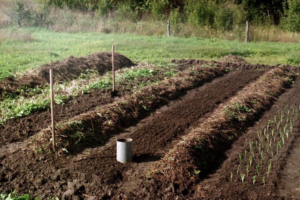 Подготовка участка и почвы под картофель