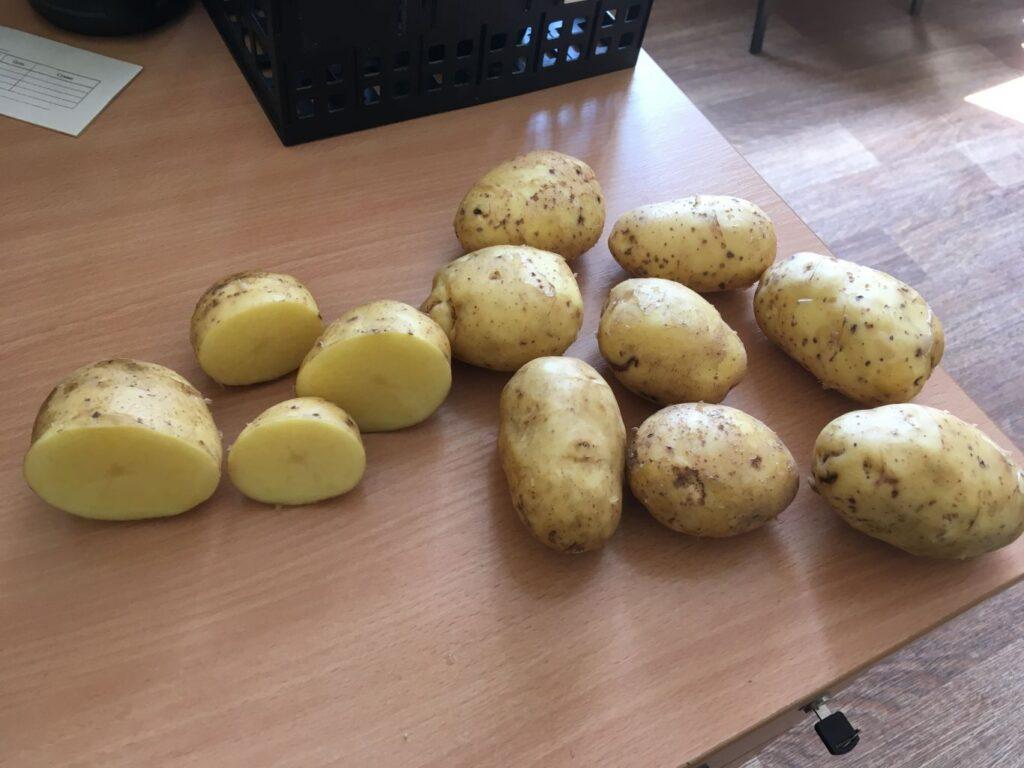 Семена картофеля Бриз