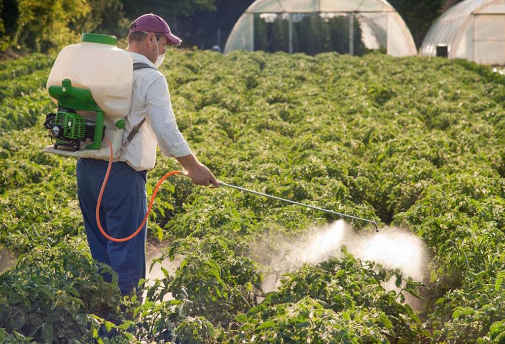 Защита картофеля от болезней и вредителей