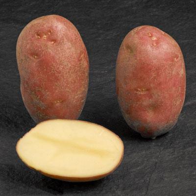 Астерикс картофель