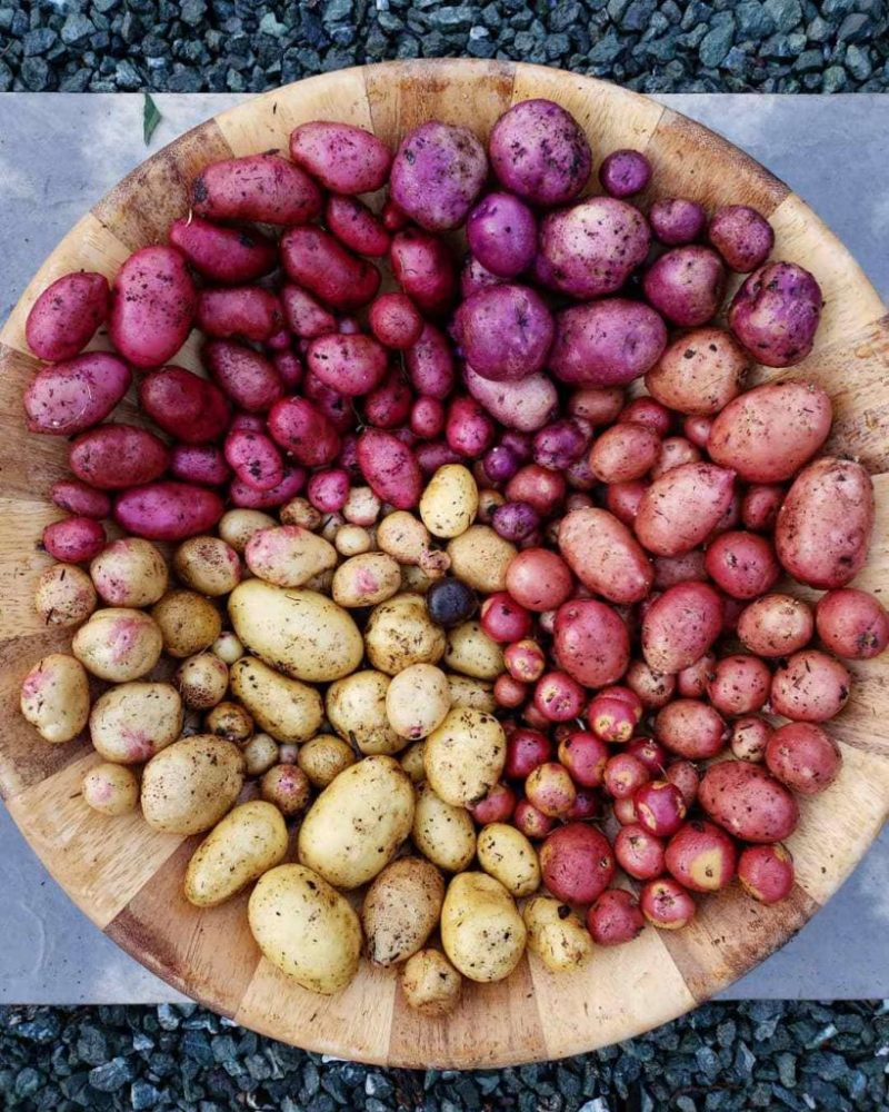 Выставка картофеля